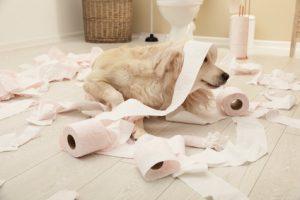 Vermieter, die Haustiere verbieten wollen, müssen den Einzelfall beachten.